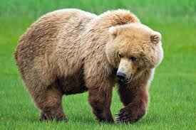 صورة صور حيوانات رغم كثرة صور الحيوانات الا انها الافضل بدون منازع