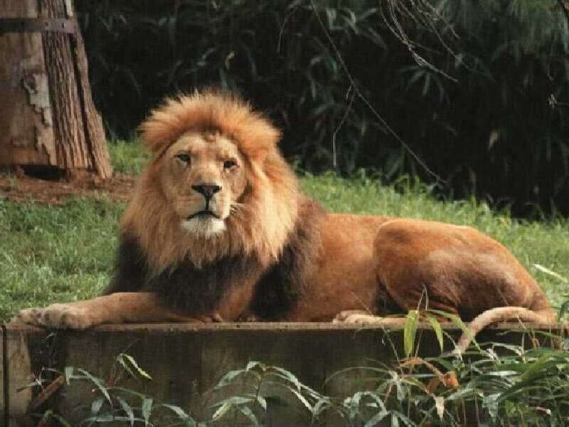 صور صور حيوانات رغم كثرة صور الحيوانات الا انها الافضل بدون منازع