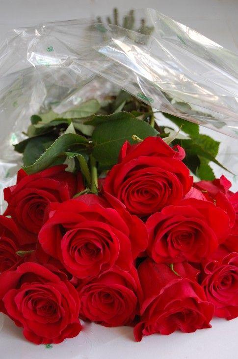 بالصور صوره ورد جوري , اروع باقة زهور بالون الاحمر 288 7
