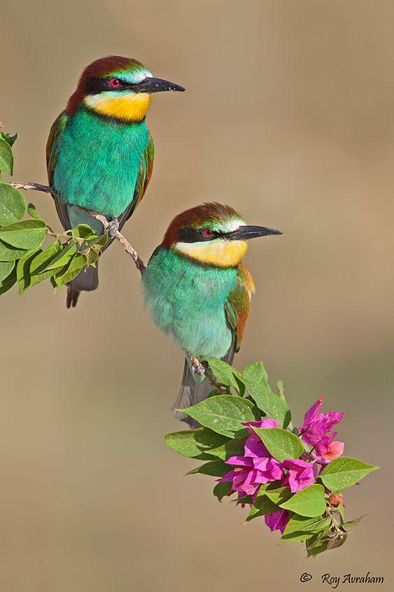صوره صور طيور , اروع واجمل خلفيات للطيور بالوانها جذابة