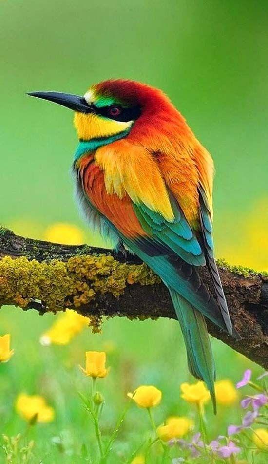 بالصور صور طيور , اروع واجمل خلفيات للطيور بالوانها جذابة 1042 2