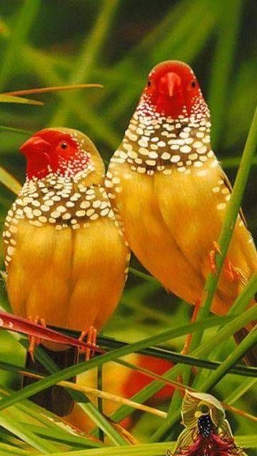 بالصور صور طيور , اروع واجمل خلفيات للطيور بالوانها جذابة 1042 6
