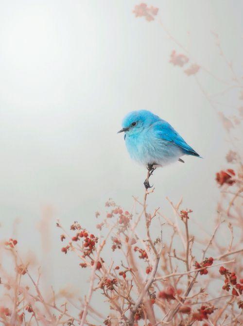 بالصور صور طيور , اروع واجمل خلفيات للطيور بالوانها جذابة 1042 8