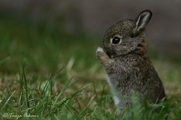 صورة صور حيوانات , خلفيات حيوانات لطيفة