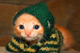 بالصور صور قطط مضحكة , مواقف مضحكة للقطط 1066 10 310x205