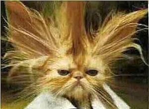بالصور صور قطط مضحكة , مواقف مضحكة للقطط 1066 3