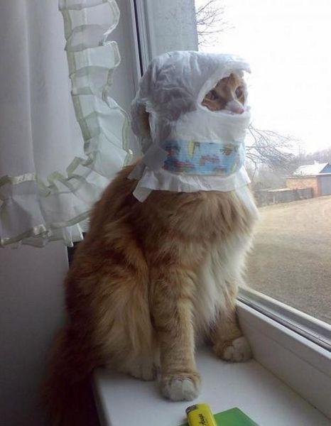 بالصور صور قطط مضحكة , مواقف مضحكة للقطط 1066 5