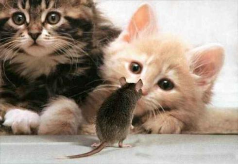 بالصور صور قطط مضحكة , مواقف مضحكة للقطط 1066 6