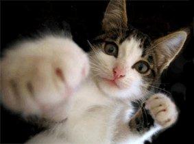 بالصور صور قطط مضحكة , مواقف مضحكة للقطط 1066 7