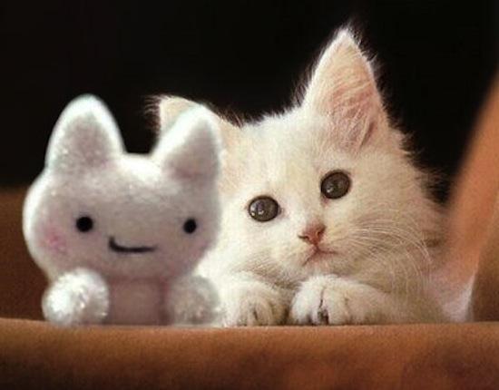 بالصور صور قطط مضحكة , مواقف مضحكة للقطط 1066 8