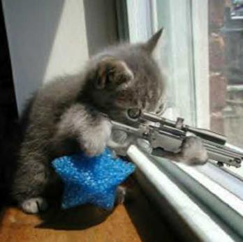 بالصور صور قطط مضحكة , مواقف مضحكة للقطط 1066 9