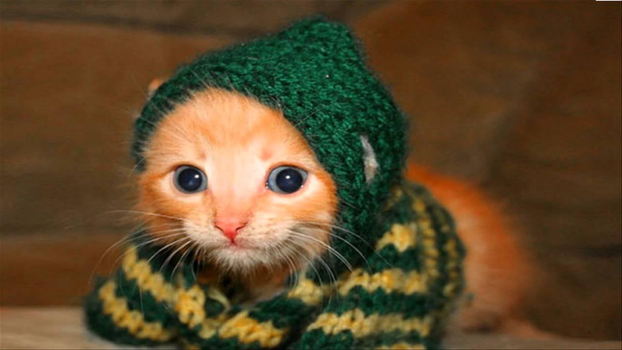 صوره صور قطط مضحكة , مواقف مضحكة للقطط