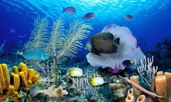 صور صور قاع البحر , شاهد اروع المناظر لقاع البحار