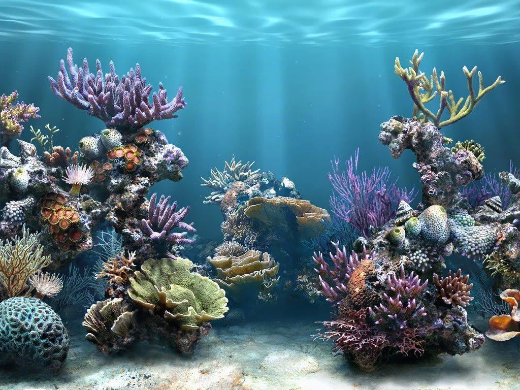 بالصور صور قاع البحر , شاهد اروع المناظر لقاع البحار 1075 2