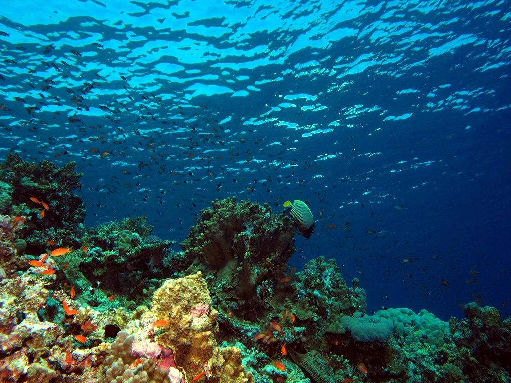 بالصور صور قاع البحر , شاهد اروع المناظر لقاع البحار 1075 3