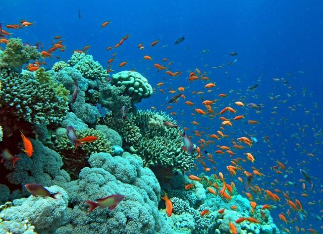 بالصور صور قاع البحر , شاهد اروع المناظر لقاع البحار 1075 4
