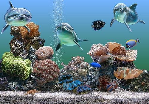 بالصور صور قاع البحر , شاهد اروع المناظر لقاع البحار 1075 5