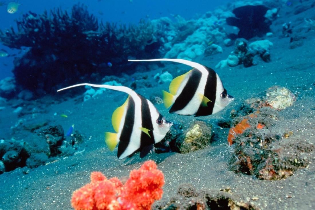 بالصور صور قاع البحر , شاهد اروع المناظر لقاع البحار 1075 6