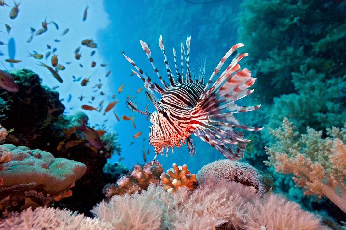 بالصور صور قاع البحر , شاهد اروع المناظر لقاع البحار 1075 7