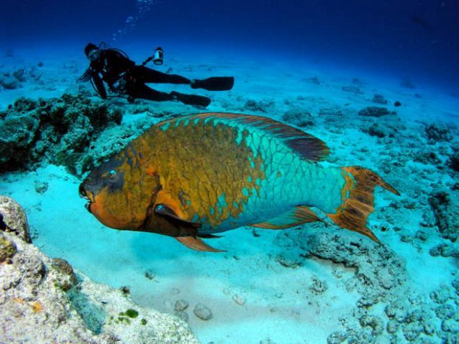 بالصور صور قاع البحر , شاهد اروع المناظر لقاع البحار 1075 8