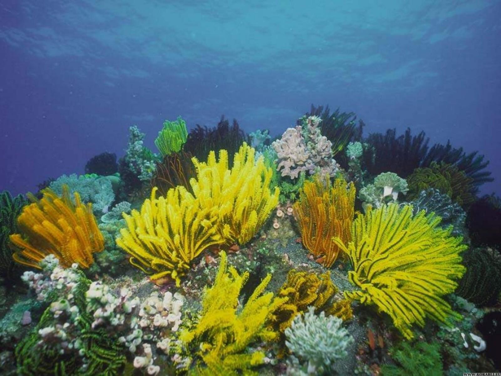 بالصور صور قاع البحر , شاهد اروع المناظر لقاع البحار 1075 9