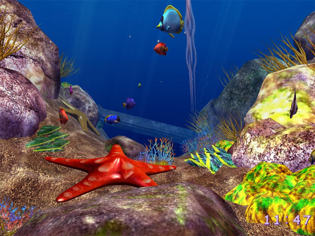 بالصور صور قاع البحر , شاهد اروع المناظر لقاع البحار 1075