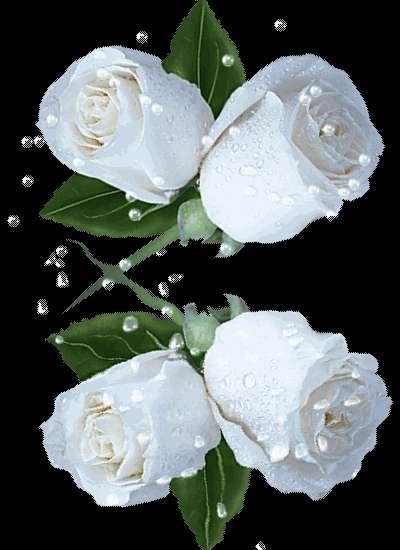 بالصور صورة وردة جميلة , شوفوا اروع ورود 1090 4