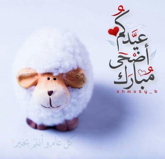 صور صور خروف , انمي العيد الاضحى