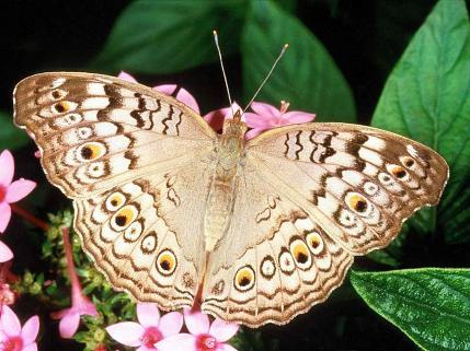 صورة صور فراشه , فراشات ملونة جميلة