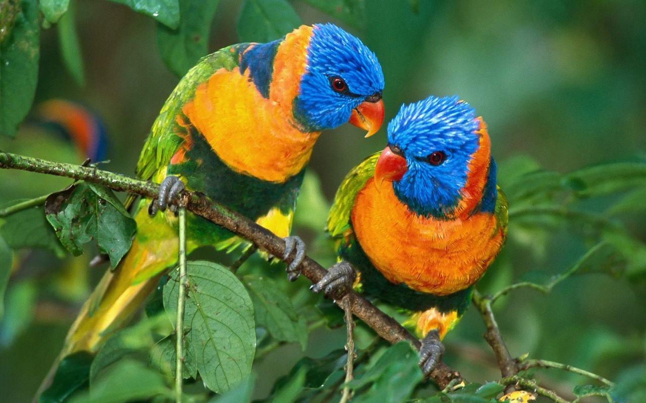 صورة صور عصفير , اجمل خلفيات عصافير بالوان جميلة