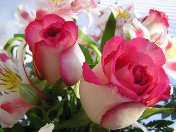 صوره صور ازهار جميله , صورة لاجمل الورود بالعالم