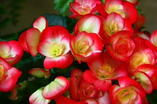 بالصور صور ازهار جميله , صورة لاجمل الورود بالعالم 1241 3