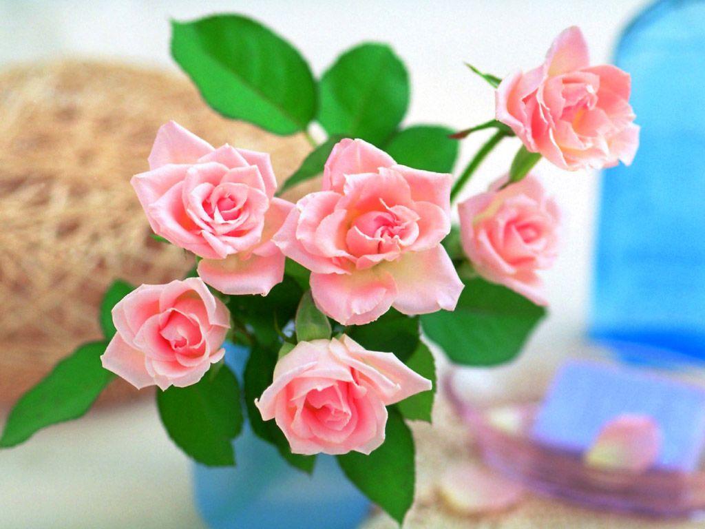بالصور صور ازهار جميله , صورة لاجمل الورود بالعالم 1241 4