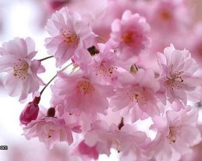بالصور صور ازهار جميله , صورة لاجمل الورود بالعالم 1241 7