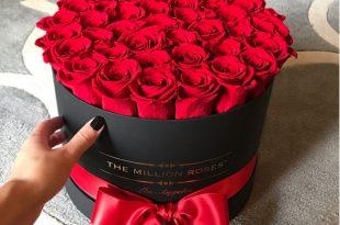 صورة صور ازهار جميله , صورة لاجمل الورود بالعالم