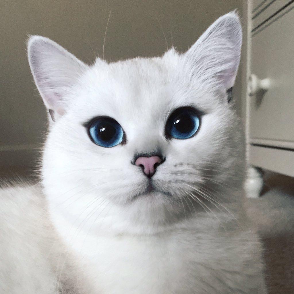 بالصور صور لقطط جميلة , صور قطط بيضاء 1276 2
