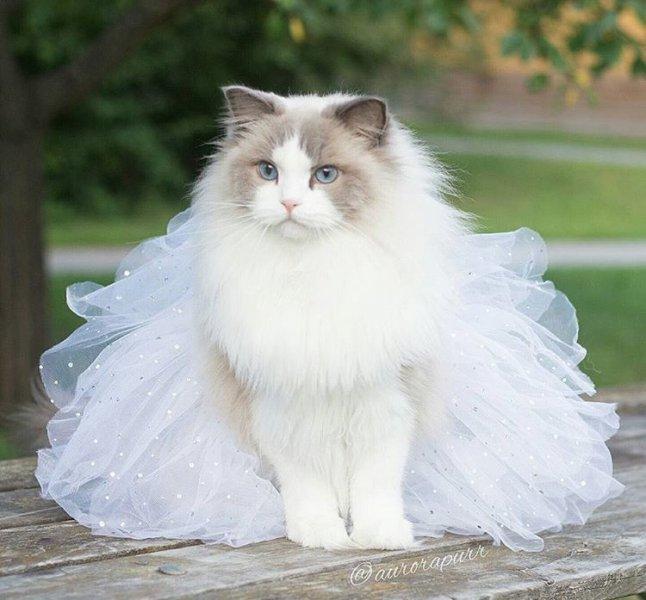 بالصور صور لقطط جميلة , صور قطط بيضاء 1276 6
