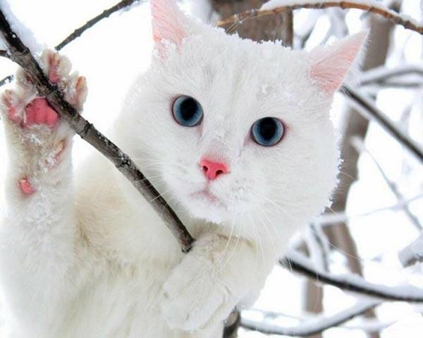 بالصور صور لقطط جميلة , صور قطط بيضاء 1276 8