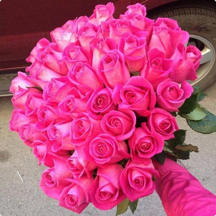 صورة صور للورود , شاهد جمال الوردة في هذه المجموعة
