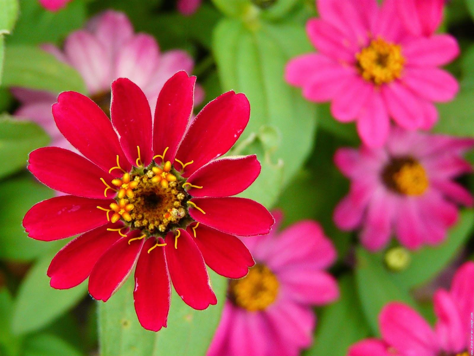 بالصور صور للورود , شاهد جمال الوردة في هذه المجموعة 1306 9