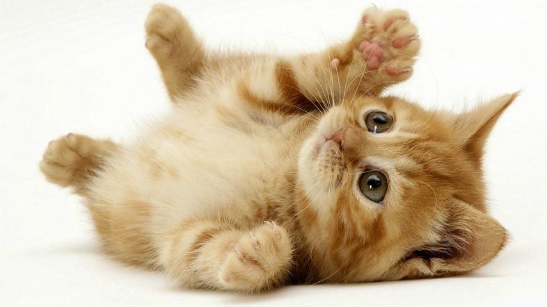 بالصور صور قطط جميلة جدا , صورة لاجمل قطة 1423 3
