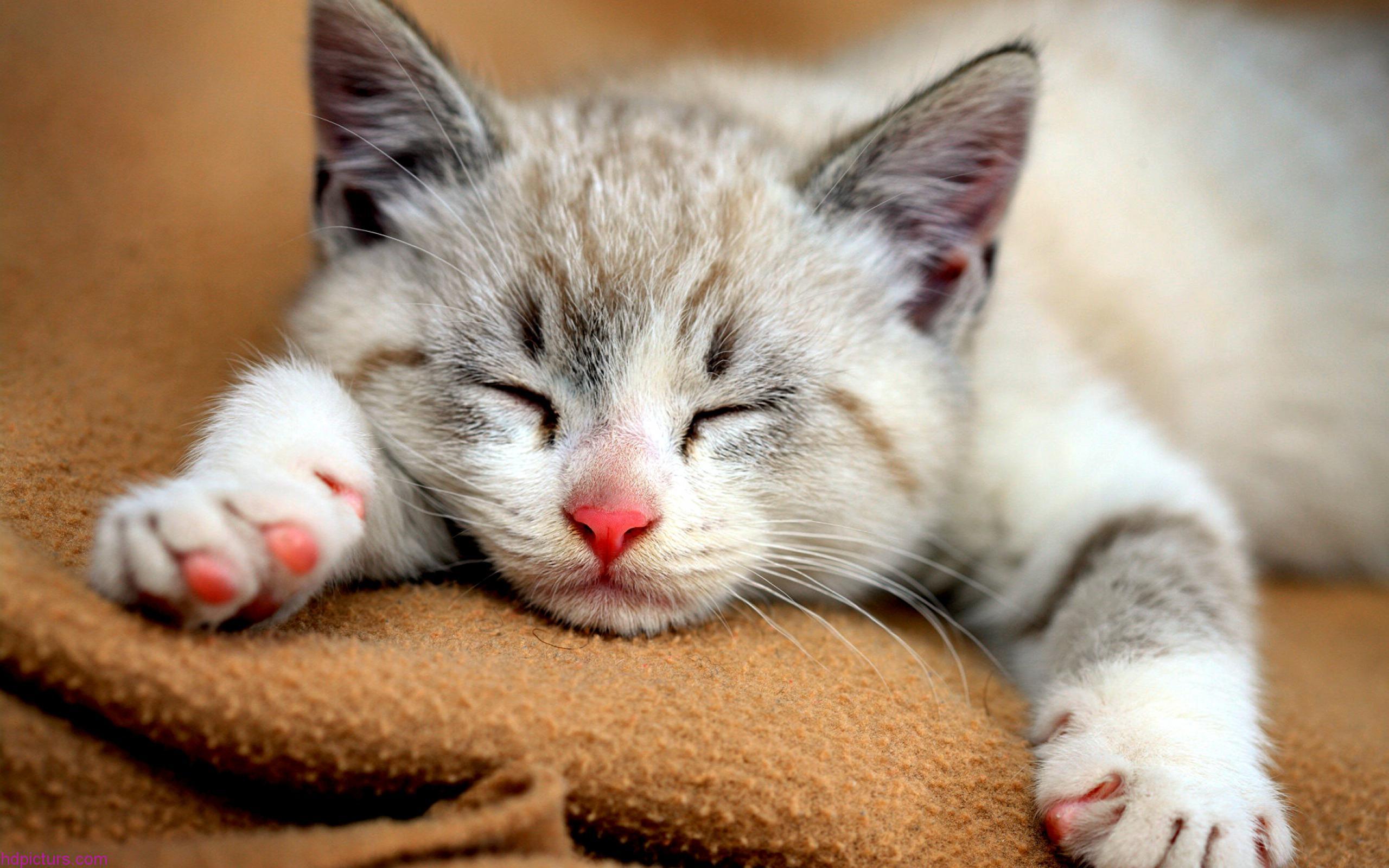 بالصور صور قطط جميلة جدا , صورة لاجمل قطة 1423 4