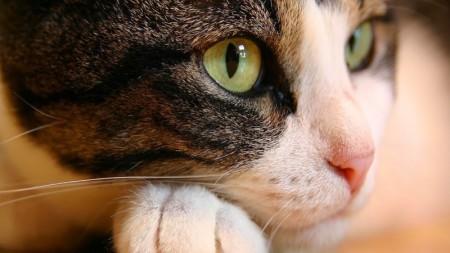 بالصور صور قطط جميلة جدا , صورة لاجمل قطة 1423 5