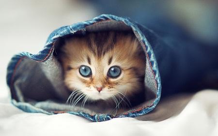 بالصور صور قطط جميلة جدا , صورة لاجمل قطة 1423 6