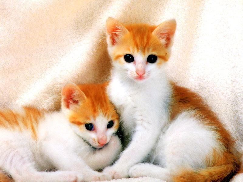 بالصور صور قطط جميلة جدا , صورة لاجمل قطة 1423 8