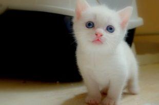 صوره صور قطط جميلة جدا , صورة لاجمل قطة