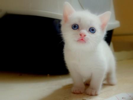 بالصور صور قطط جميلة جدا , صورة لاجمل قطة 1423