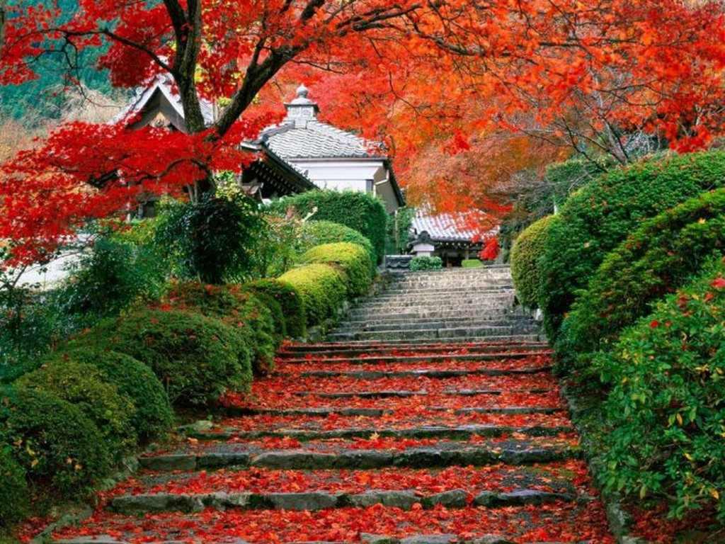 بالصور صور طبيعة جميلة اجمل الصور الطبيعة , اروع صور طبيعة 1432 3