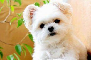 صوره صور كلاب جميلة , احلى كلاب كيوت
