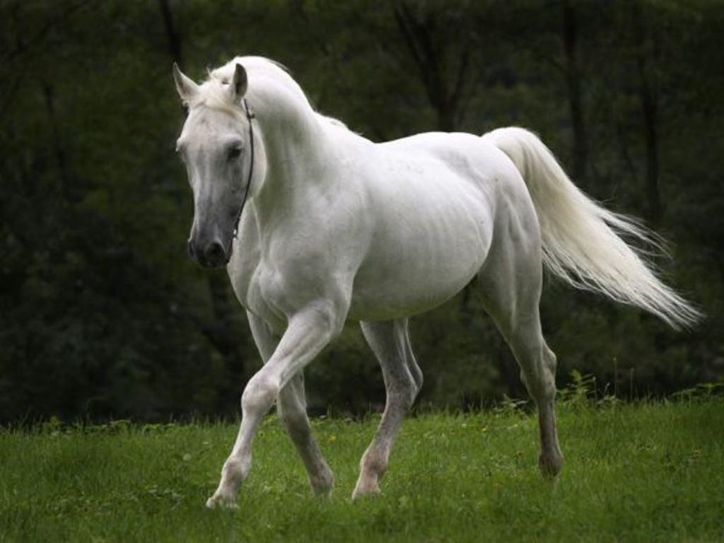 صورة صور حصان , اجمل حصان فى العالم